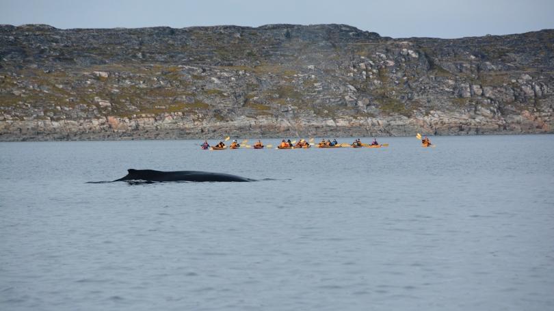 Kayakers near Baffin Island